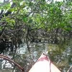 ヒルギ苗600本植樹 名蔵湾